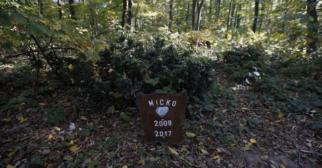 Improvised pet graveyards hidden in Belgrade parks