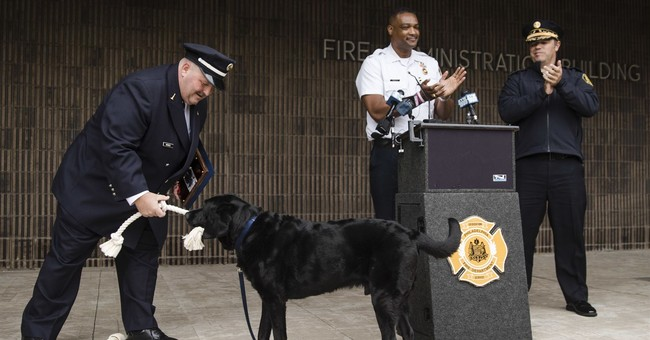 Philadelphia Fire Department arson dog is retiring