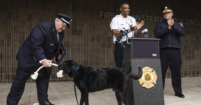 Philadelphia Fire Department arson dog is retiring