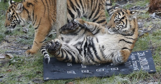 London zoo to animal residents: Stand up and be counted