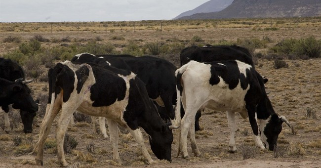 Severe Bolivian drought hurts crops, threatens capital