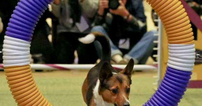 3 new breeds are ready to run with Westminster dog show pack