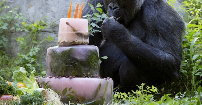 Zoo Atlanta mourns death of Shamba, 58, its oldest gorilla
