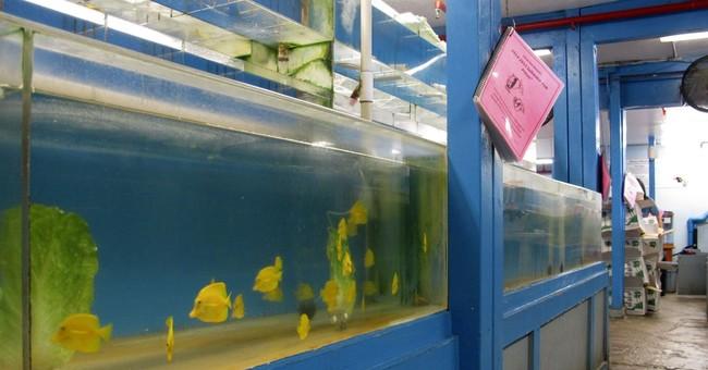 Judge halts aquarium fishing until environmental review