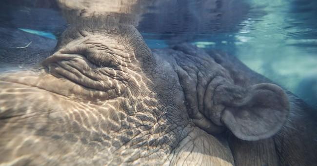 Dad of Cincinnati Zoo's famous baby hippo dies at age 36