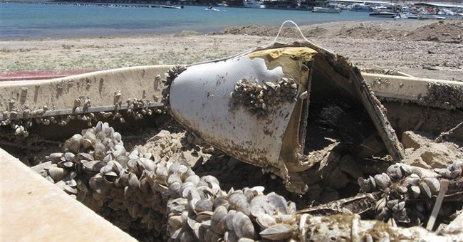Western governors want federal help in invasive mussel fight