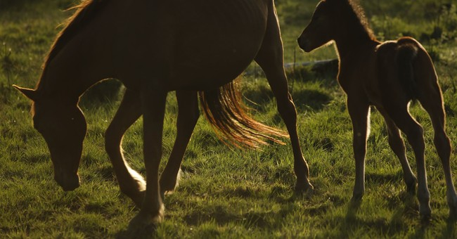Wild horses a draw in South African mining village