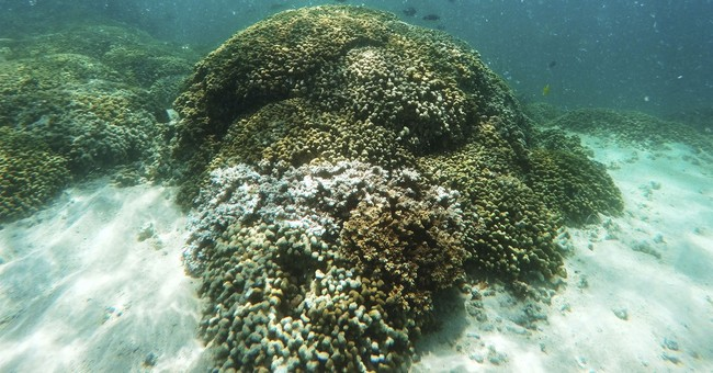 Scientists: Half of Hawaii's coral reefs bleached in 2014-15