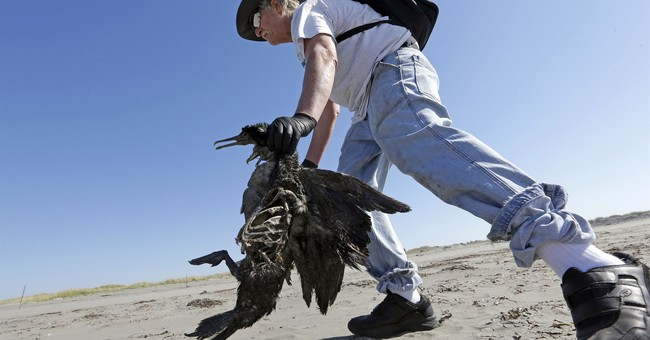 Volunteers track dead birds as indicator of coast's health