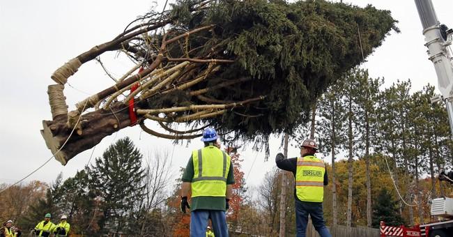 Pennsylvania tree to adorn Rockefeller Center for Christmas