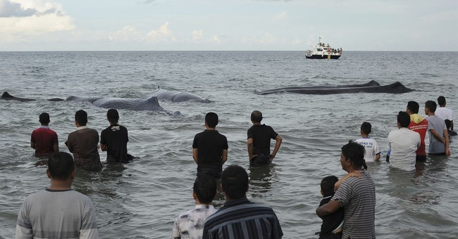 Rescuers try to save whales beached off Indonesia's Aceh