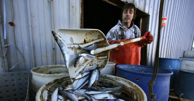 Green groups, fishermen at odds over new rules on small fish
