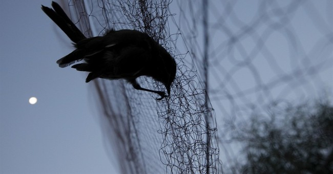 UK bases official: No let-up on bird poaching crackdown