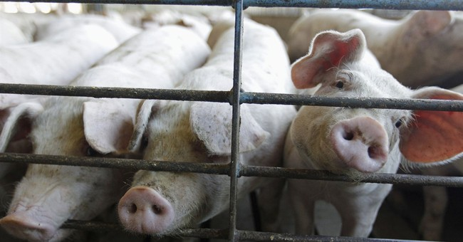 Pork industry says not to worry about a bacon shortage