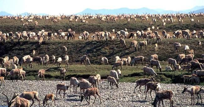 Congress debates oil drilling in largest US wildlife refuge