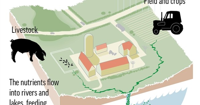 AP Explains: Farm runoff and the worsening algae plague