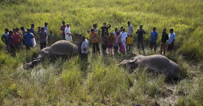 India passenger train hits and kills 2 Asian elephants