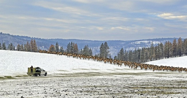Deer hunting limited in Western US states after tough winter