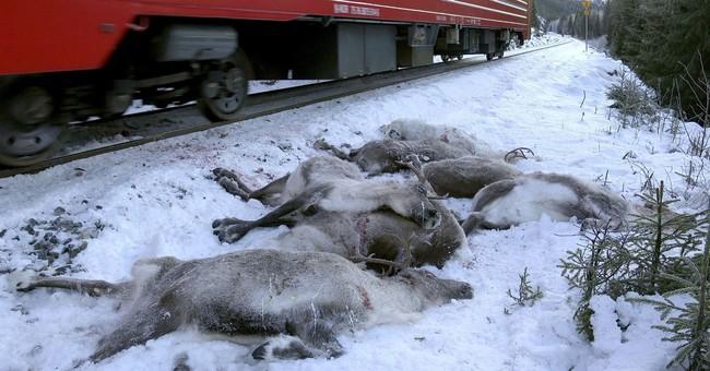 Norwegian train kills 17 reindeer in Arctic