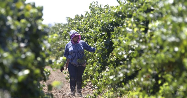 California farmworker union wins battle to ensure contracts