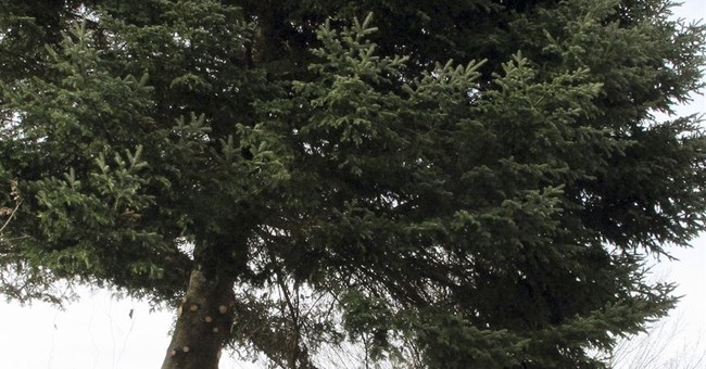 State Christmas tree honors boy who planted it, died in '90s
