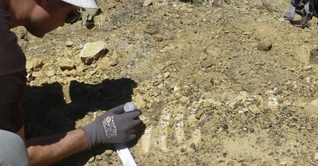 Remains of ancient sea cow unearthed on California island