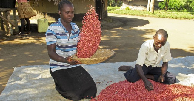 'Super beans' raise hopes in hunger-prone parts of Africa