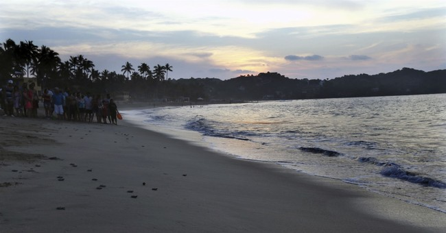 Activists in Mexico protect, release sea turtle hatchlings