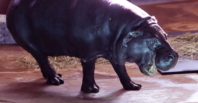 Singer of novelty song welcomes hippopotamus to Oklahoma