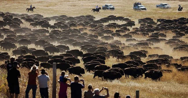 South Dakota park to make unplanned bison roundup after fire
