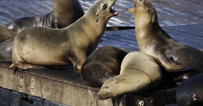 2 rare sea lion attacks shut down cove in San Francisco Bay