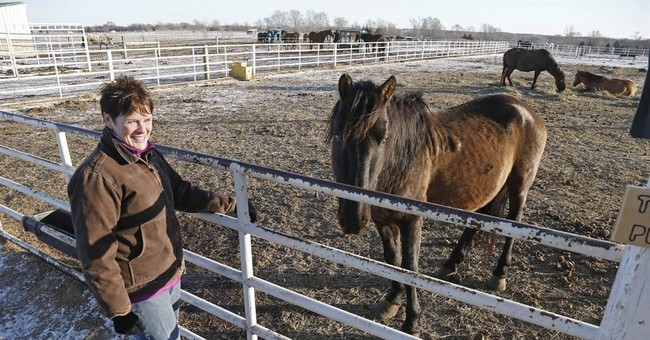 300 wild horses in South Dakota need homes as deadline looms