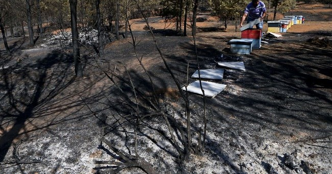 Chileans hope to recover from country's worst wildfires