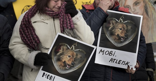 In Lithuania, people rally after rescue dog is slain