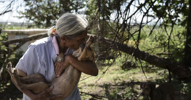 Abandoned pets swamp shelters in post-hurricane Puerto Rico