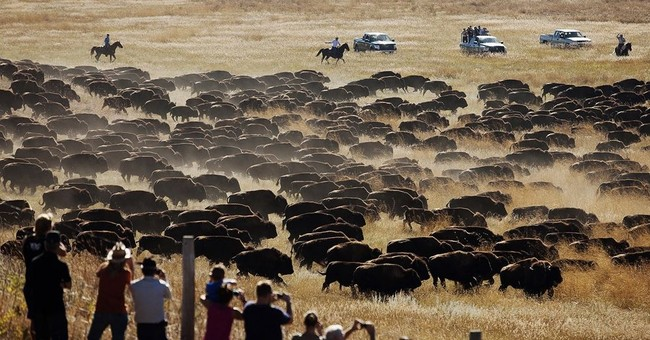 Officials don't expect decline in tourism from Custer fire