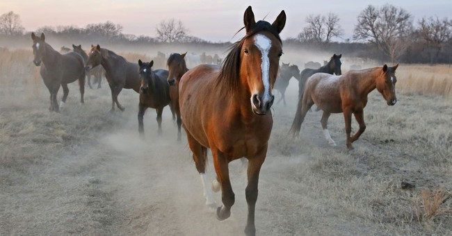 Oklahoma ranch offers up-close look at wild horses