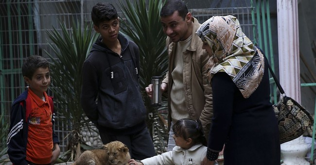 Gaza zoo tries to sell lion cubs fearing cost of care