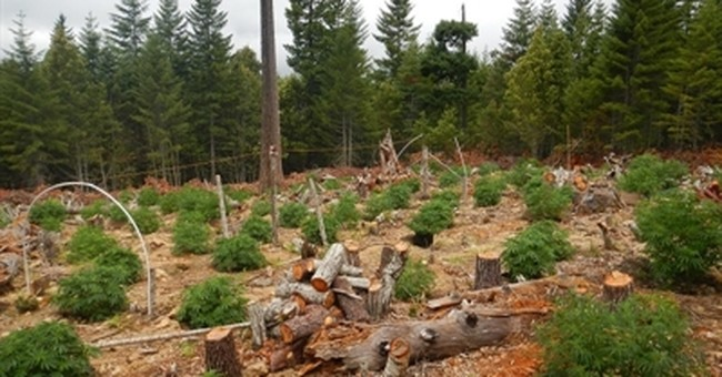 Legal pot in California brings host of environmental rules