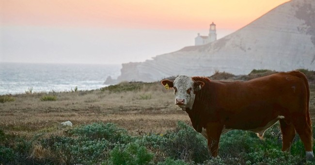 Nature Conservancy acquires California coastal ranchland