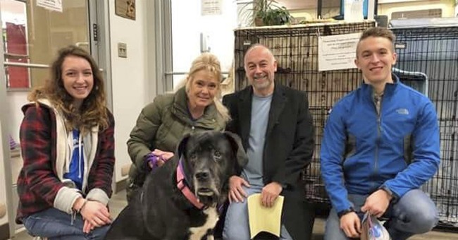 After 445 days at KC shelter, Mastiff mix finally lands home