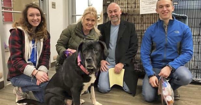 After 445 days at KC shelter, Mastiff mix finally lands home