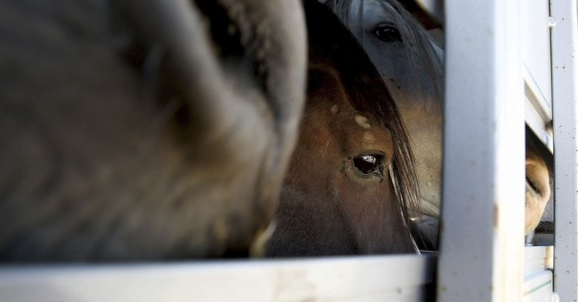 Appeal seeking Idaho horse herd sterilization is dismissed