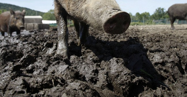 Feral hog poison field tests in Texas, Alabama in 2018