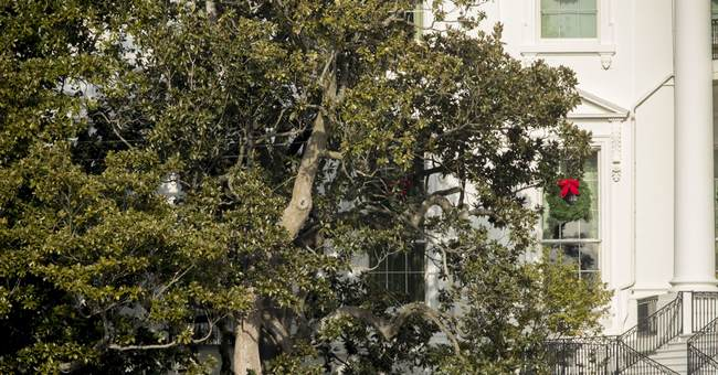 Historic White House magnolia cut back for safety reasons