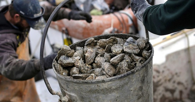 Study finds new bacterial strain can contaminate shellfish