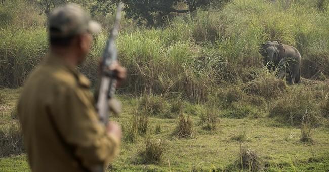 Elephant habitats shrink in India as encroachments increase