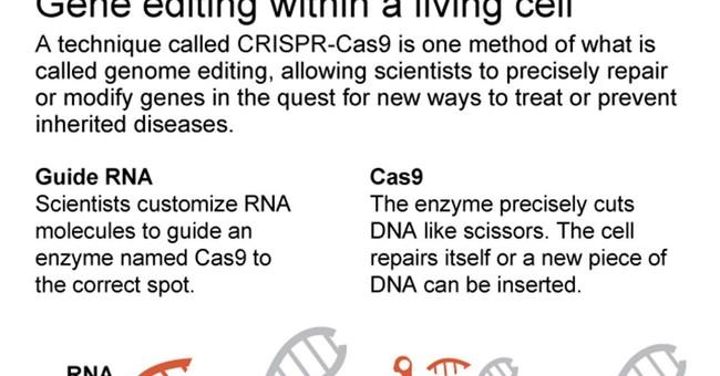 Could gene editing help avoid disease? Maybe