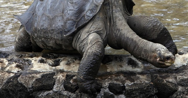 Remains of tortoise Lonesome George returning to Ecuador