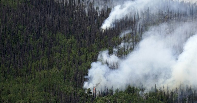 Colorado's 834 million dead trees threaten to worsen fires